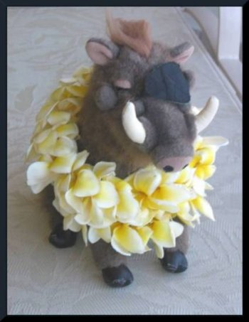 Warty adorned with fragrant plumeria leis in Hawai'i (c) 2004 DCoyote