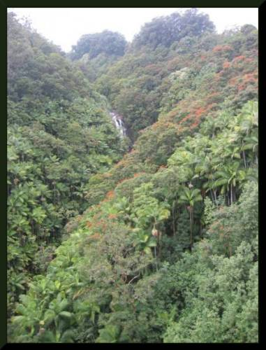 Stunning Hawai'ian Scene, Tropical Gorge  (c) 2004 DCoyote