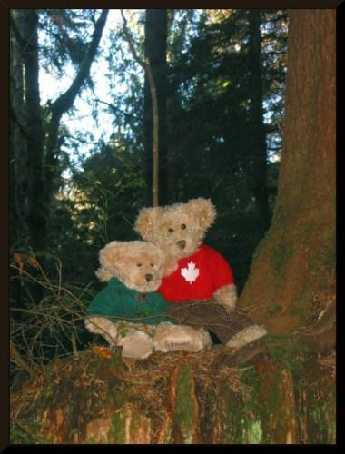 Teddy and Tinker in the woods  (c) 2003 DCoyote