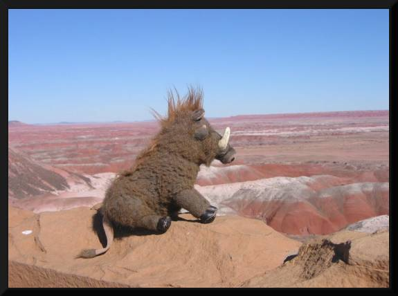 Warty at Painted Desert (c) 2005 David Coyote