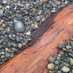 'French Beach Stones and Red Cedar' (c) 2005 David Coyote